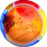 میکروب شناسی